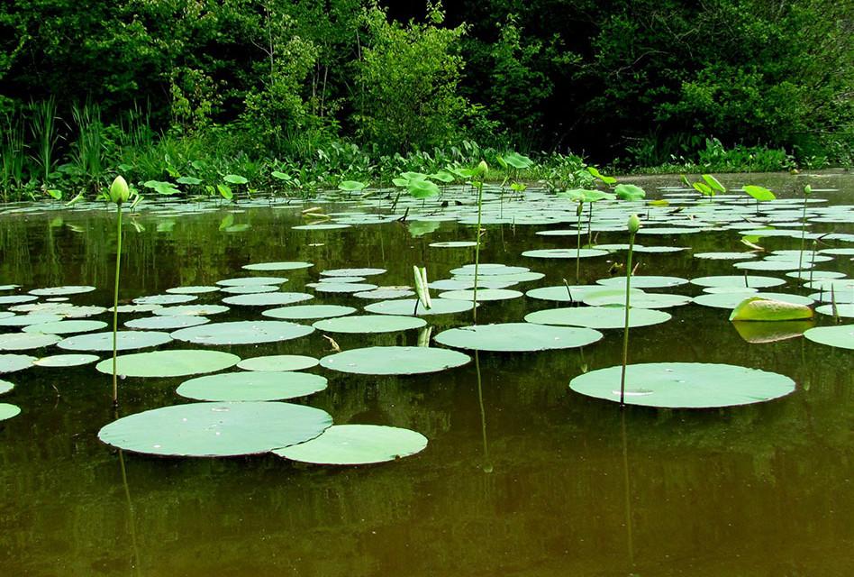 2016 Annual Report: Aquatic Vegetation Management Program Lost Lake & Knops Pond