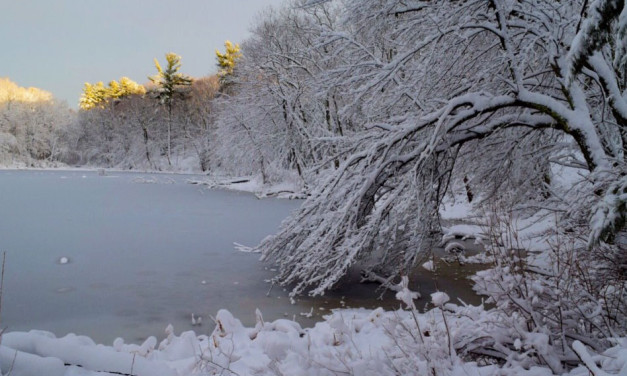 Duck Pond After Snowstorm